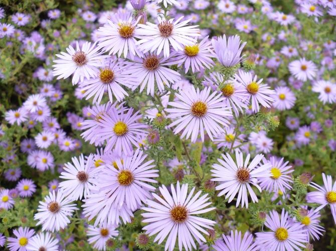 June Flowers Wild