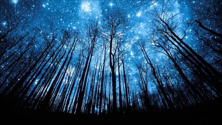 Midsummer Night Sky Trees Shadow