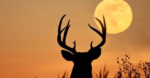 Wallpaper Buck Full Moon